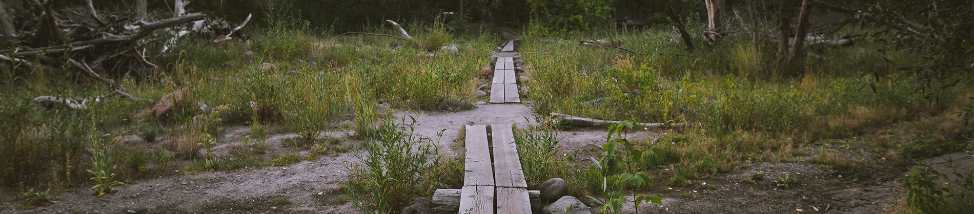 Abandoned grass area with wooden plants on the ground making a path