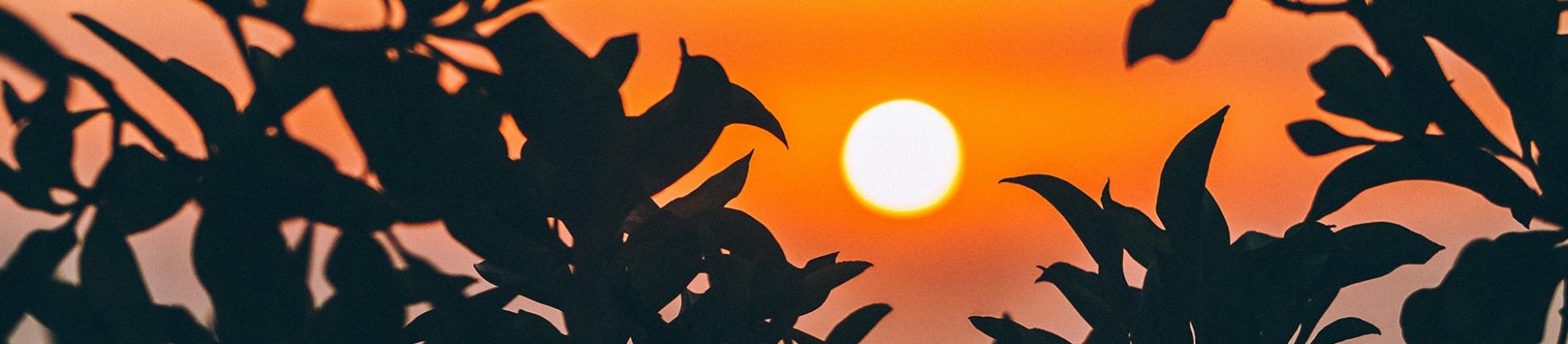 Sun shining through the trees at sunrise